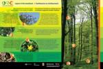 INCH Woodland Panel
